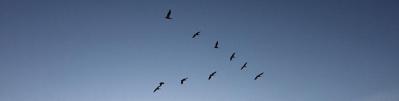 birds1500